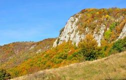 Bunte Herbstwaldberglandschaft Lizenzfreies Stockbild