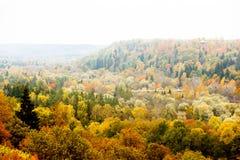 Bunte Herbstwaldlandschaft, strukturierter Hintergrund Stockfotos