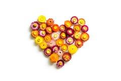 Bunte Herzformblumen lokalisiert stockfoto