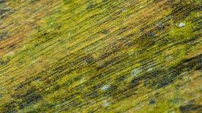 Bunte Holzverkleidung Lizenzfreies Stockfoto