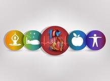 Bunte Ikonensammlung des menschlichen Herzgesundheitswesens Lizenzfreie Stockfotografie