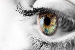 Bunte Iris des menschlichen Auges mit dem Schwarz- und witeumgeben Stockfotografie