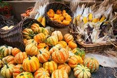 Bunte Kürbisansammlung auf dem Herbstmarkt Stockfoto