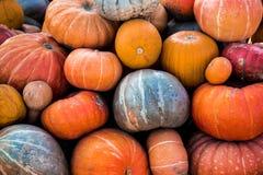 Bunte Kürbissammlung auf Herbstmarkt im Freien stockfotografie
