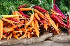 Bunte Karotten stockbilder
