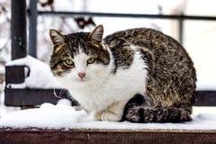 Bunte Katze, die auf dem Schritt im Winter sitzt stockfotografie