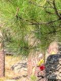Bunte Kleidung und die Bündel, die nahe den Teufeln gesetzt werden, ragen in Wyoming hoch stockbilder