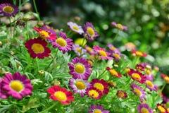 Bunte kleine Blume Stockbild