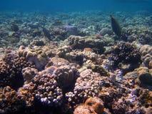 Bunte Koralle stockfotos