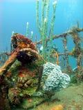 Bunte Korallen, die ein Wrack bewohnen Stockfotografie