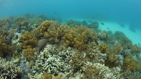 Bunte Korallen in Papua-Neu-Guinea stock footage