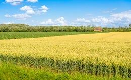 Bunte landwirtschaftliche Landschaft in den Niederlanden Stockfotografie