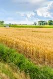 Bunte landwirtschaftliche niederländische Landschaft in der Sommerzeit Lizenzfreie Stockfotografie
