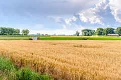 Bunte landwirtschaftliche niederländische Landschaft in Sommerzeit kurz afte Lizenzfreies Stockfoto