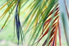 Bunte lange Blätter im Wind stockbilder