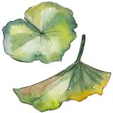 Bunte Lotosblume des Aquarells Botanische mit Blumenblume Lokalisiertes Illustrationselement vektor abbildung