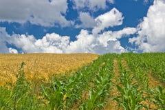 Bunte Mais- und Weizenfelder im Frühjahr lizenzfreies stockfoto