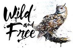 Bunte Malerei des Eulennachtvogel-Aquarells, großer Vogelfleischfresser, Design des T-Shirts, König der Nacht, geben Fliege frei lizenzfreie abbildung