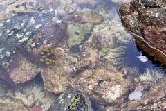 Bunte Meeresgrundschüsse genommen an den Stränden der Seychellen-Insel stockfoto