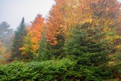 Bunte Misty Fall Morning in einem Wald Lizenzfreie Stockfotos