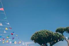 Bunte mit dem Kopfe stoßende Flaggen gebunden an Dragon Tree auf blauem Himmel auf Hintergrund, Spanien lizenzfreie stockfotos