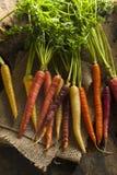 Bunte multi farbige rohe Karotten Stockfotos