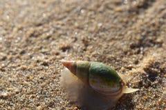 Bunte Nahaufnahme eines Schnecke Nautilus auf dem Strand in der Wildnis in Südafrika Lizenzfreie Stockfotos