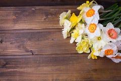 Bunte Narzissen des neuen Frühlinges blüht auf Braun gemaltem woode stockfotografie
