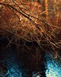Bunte Niederlassungen des kahlen Baums Stockfoto