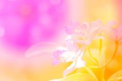 Bunte Orchidee Lizenzfreie Stockfotos