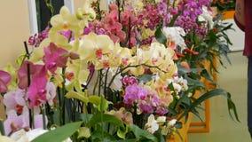 Bunte Orchideenblumen auf Ausstellung im Gew?chshaus stock video footage