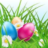 Bunte Ostereier in den Gras- und Gänseblümchenblumen Stockfotos