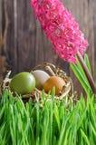 Bunte Ostereier im Nest im Gras vor hölzernem Fenn Stockfotos