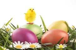 Bunte Ostereier und Huhn Lizenzfreies Stockfoto