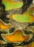 Bunte Palmenbaumrindebeschaffenheit Lizenzfreie Stockbilder