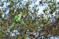 Bunte Papageien Stockbild