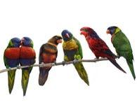 Bunte Papageien Lizenzfreies Stockfoto