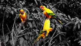 Bunte Papageien Lizenzfreie Stockfotografie