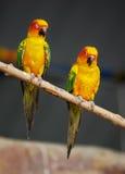 Bunte Papageien, die auf Klotz sitzen Lizenzfreies Stockfoto