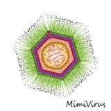 Bunte Partikelstruktur des Virus Mimi lokalisiert Stockbilder