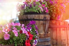 Bunte Pelargonie in den hölzernen Fässern und den Eimern des Gartens stockbild