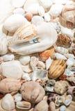 Bunte Perlen, die in der großen Muschel liegen Lizenzfreies Stockfoto