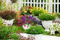 Bunte Petunien in den potflowers Lizenzfreie Stockbilder