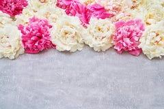 Bunte Pfingstrosenblumen auf grauem Hintergrund Kopieren Sie Raum, Draufsicht Stockfotografie