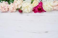 Bunte Pfingstrosengrenze auf weißem hölzernem Hintergrund Kopieren Sie Raum, Stockbilder
