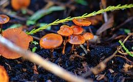 Bunte Pilze tief innerhalb eines Blumenbeets lizenzfreie stockfotos