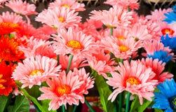 Bunte Plastikblumen Lizenzfreie Stockfotos