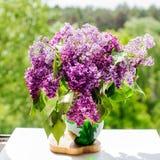 Bunte purpurrote Flieder lizenzfreie stockfotografie