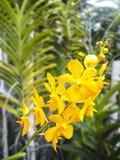 Bunte purpurrote Orchideeblumen Lizenzfreie Stockbilder