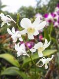 Bunte purpurrote Orchideeblumen Lizenzfreie Stockfotos